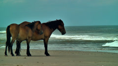 Two wild mares by the atlantic ocean Stock Footage