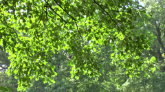Powerful sunlight piercing its way through the forest tree - stock footage