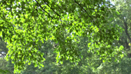 Stock Video Footage of Powerful sunlight piercing its way through the forest tree