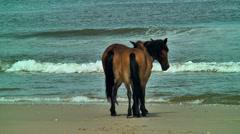Wild horses mares by the atlantic ocean Stock Footage
