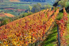 Autumnal vineyards on the hills in piedmont, italy. Stock Photos