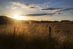 Beautiful summer landscape of sun backlighting field in countryside Stock Photos