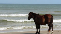 Wild horse stands by sea Stock Footage