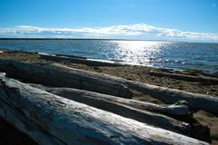 Pacific northwest ocean beach south of vancouver with driftwood around noon Stock Photos