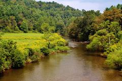 Stock Photo of Yellow wild flowers mountain river