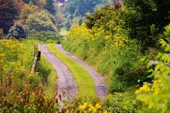 Country road wild flowers - stock photo