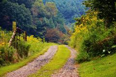 Country farm road wild flowers - stock photo
