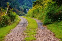 Wild flowers bloom country road - stock photo