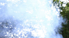 Forest Fire, Smoke In Woods Stock Footage