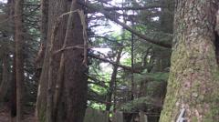 Log cabin forgotten Stock Footage