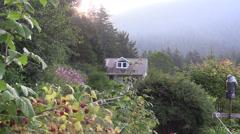 Raspberries in the garden Stock Footage
