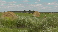 Summer Day at the Farm Hayfield Stock Footage