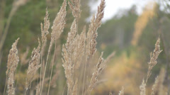 Dried grass Stock Footage