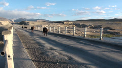 Pamir Highway, cows on the bridge, motorbike, Chinese truck Stock Footage