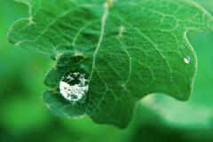 Raindrop Stock Photos