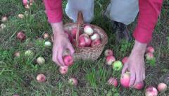 Farmer harvesting fresh apples in garden Stock Footage