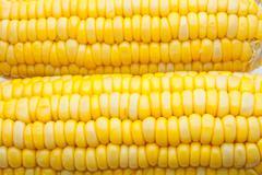 Corn-cob Stock Photos