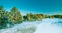 Snow pine forest Stock Photos