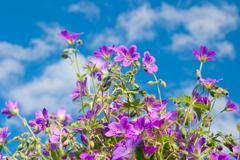 Kirkas elinvoimainen kukka Kuvituskuvat