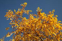 Color burst of autumn foliage Stock Photos