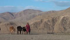 Women walk back their cows in Tajik village Stock Footage