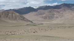 Goats and sheep walk through arid mountains in Tajikistan, agriculture, rural Stock Footage