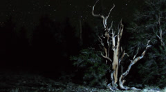 Astrophotography Time Lapse of Stars over Ancient Bristlecone Pine -Pan - stock footage