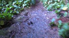 Shrew , vole on trail Stock Footage