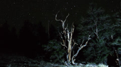 Astrophotography Time Lapse of Stars over Ancient Bristlecone Pine -Zoom In - stock footage