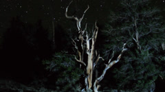 Astrophotography Time Lapse of Stars over Ancient Bristlecone Pine -Zoom Out - stock footage