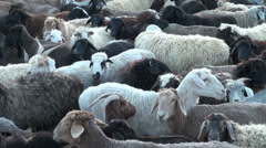 Sheep in a corral in small Tajik settlement, livestock, animals, rural Stock Footage