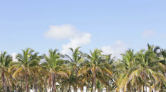 Tropical Palms Stock Footage