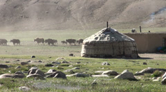 Yaks walk behind a yurt, in Tajikistan's Pamirs Stock Footage