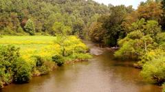 Yellow wild flowers mountain river Stock Footage