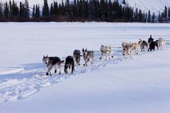 Dogsled team of siberian huskies out mushing Stock Photos