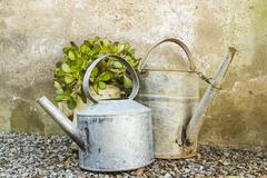 Potted plant in old an galvanised teapot Stock Photos