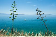 agave coastline - stock photo