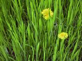 Stock Photo of green summer meadow and yellow flowers over