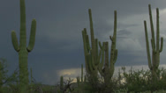 Stock Video Footage of Arizona Desert Cactus Storm Clouds Time Lapse