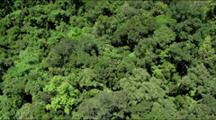 Aerial flight over dense lush green rain forest Stock Footage