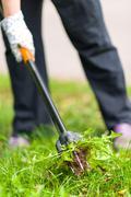 Woman pulling weeds Stock Photos