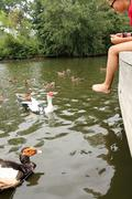Feeding Ducks - stock photo