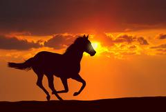Horse running at sunset Stock Illustration