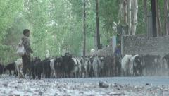 Young shepherd walks his goats through a village in the Wakhan, Tajikistan Stock Footage