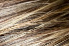 background streaked hair. macro - stock photo