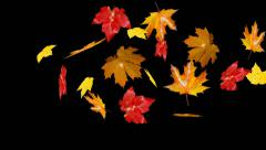 Leaves falling Stock Footage