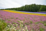 Stock Photo of colorful flower blossom garden in japan2