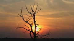 Timelapse of a death tree with sunset - stock footage
