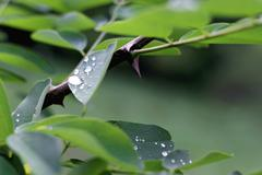water drop on the green leaves after rain - stock photo