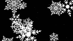 Closeup of Large winter snowflakes falling in a loop 2 - stock footage